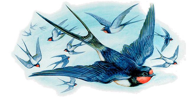 Картинки по запросу перелетные птицы картинки для детей