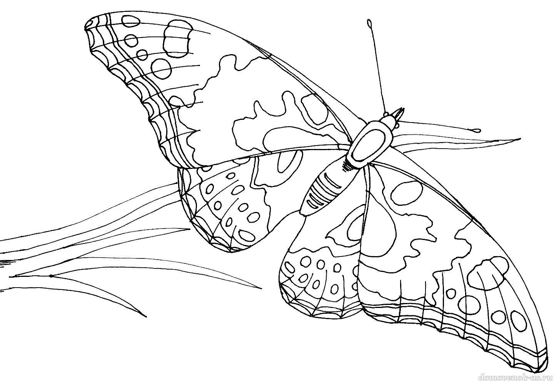 Раскраска для детей. Бабочка