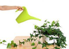 как необходимо поливать комнатные растения