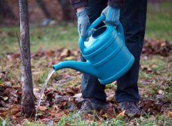 Как правильно поливать деревья и кустарники в саду и на даче