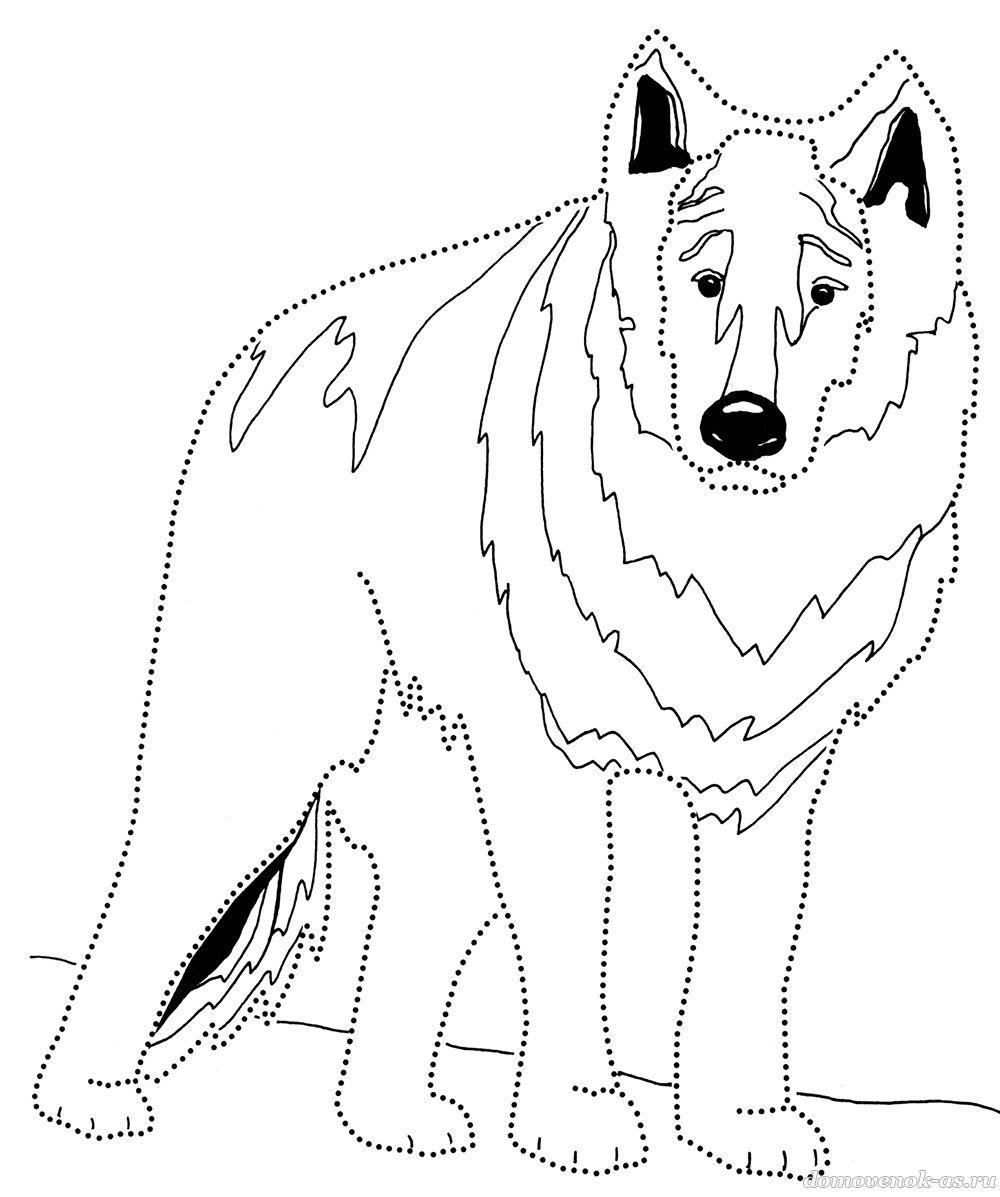 Раскраска для детей. Волк