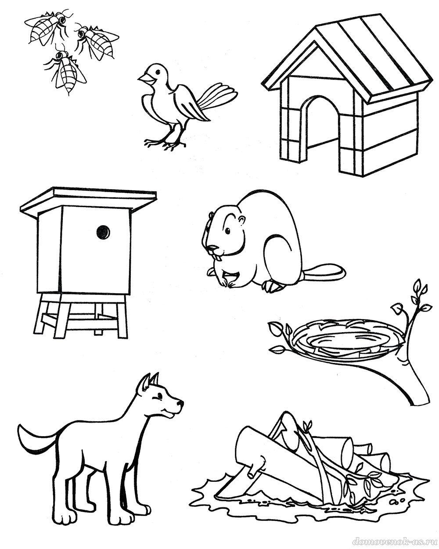 Жилище животных раскраски