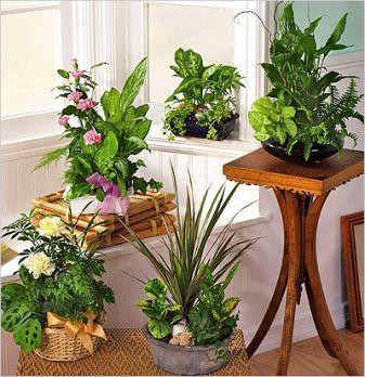 Какие растения лучше всего выращивать
