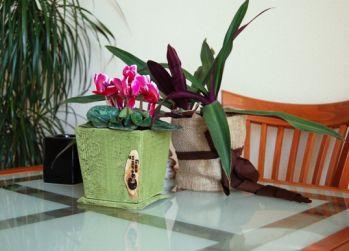 вредители комнатных растений мучнистый червец борьба