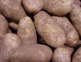 Умови зберігання картоплі
